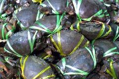 Fresh Crab Royalty Free Stock Photography