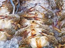 Fresh crab, seafood ingredient Royalty Free Stock Photos