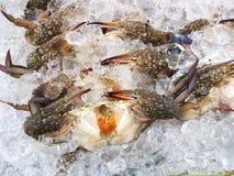 Fresh crab, seafood ingredient Stock Image