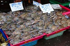 Fresh crab for sell Royalty Free Stock Photography
