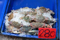 Fresh crab for sell Stock Photos
