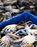 Fresh Crabs Stock Photo