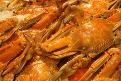 Fresh crabs Stock Photography