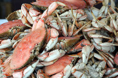 Fresh crabs Royalty Free Stock Photo