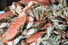 Fresh crabs. – closeup Royalty Free Stock Photo