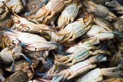 Fresh crabs background Royalty Free Stock Photos
