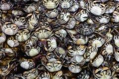Fresh crabs background Stock Image