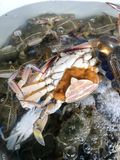 Fresh crabs in the basin. Many fresh crabs in the basin Stock Photo