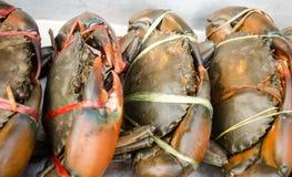 Fresh Crabs Stock Photo