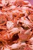 Fresh crabs Royalty Free Stock Photos