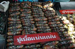 Fresh Crabs Display Royalty Free Stock Photo