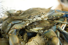Fresh crabs at a fish market Royalty Free Stock Images