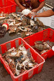 Fresh crabs from fishery boat at port Stock Photography