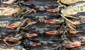 Fresh Crabs at Food Market Stock Image