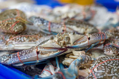 Fresh crabs at local market Stock Photography