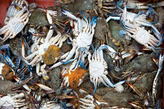 Fresh crabs in market Royalty Free Stock Photos