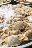 Fresh Crabs in the market Royalty Free Stock Photo