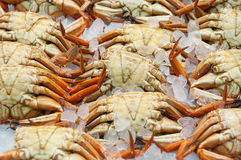 Fresh crabs in the market. Chilled fresh crabs in the market Stock Image