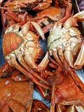 Fresh crabs at market. Fresh red crabs at market Stock Photos