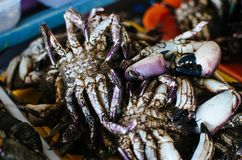 Fresh crabs in the market royalty free stock photography
