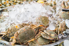 Fresh Crabs in the market Stock Image
