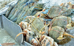 Fresh crabs and prawns on ice in seafood market Stock Photography