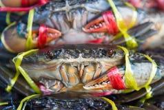 Fresh crabs on sale Stock Photo