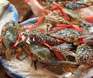 Fresh Crabs for Sale Royalty Free Stock Images