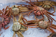 Fresh crabs at seafood market Stock Photos