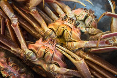 Fresh crabs at seafood market Royalty Free Stock Image