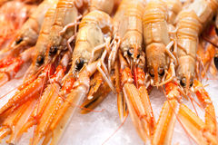Fresh crabs - shrimps Royalty Free Stock Image
