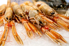 Fresh crabs - shrimps Royalty Free Stock Photo