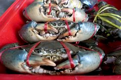 Fresh crabs are tied in a red pickup in the market. Fresh and delicious.the big claws of a crabs. Crabs are suitable for cooking. It is a good raw material Stock Photo