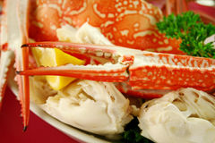 Fresh Cracked Sand Crab Royalty Free Stock Photos