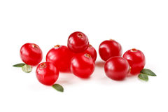Fresh cranberries. Stock Photography