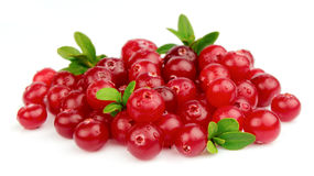 Fresh cranberries Royalty Free Stock Images