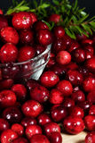 Fresh Cranberries. Freshly washed cranberries in glass bowl with green leaves in background royalty free stock photo