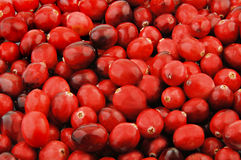 Fresh Cranberries Stock Photography