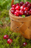 Fresh cranberries in a basket Stock Photography
