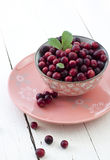 Fresh cranberries in bowl. Cranberries with leaf and flowers in a pink bowl on white stock photography