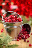 Fresh cranberries. Stock Photos