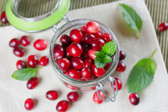 Fresh cranberries close-up. Royalty Free Stock Photo