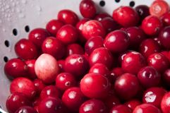 Fresh Cranberries in Colander Royalty Free Stock Photo