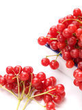 Fresh cranberries in dish isolated Royalty Free Stock Photography