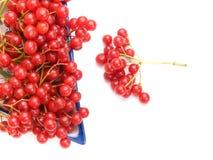 Fresh cranberries in dish Stock Image