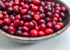 Fresh cranberries Fresh cranberries in wooden bowl  Royalty Free Stock Photos