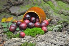 Fresh cranberries fruits juice bio organic. Juice health stock image