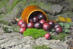 Fresh cranberries fruits juice bio organic. Juice health royalty free stock image