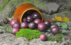 Fresh cranberries fruits juice bio organic. Juice health royalty free stock photos