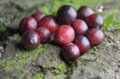 Fresh cranberries fruits juice bio organic. Juice health royalty free stock photography